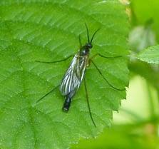 gnat on a plant